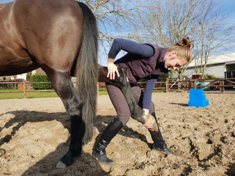 intake en behandeling fysiotherapie paard